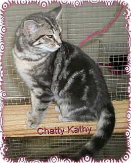 Domestic Shorthair Cat for adoption in Ozark, Alabama - Chatty Kathy