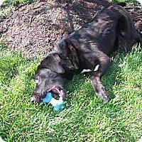 Adopt A Pet :: Blaze - Lewisville, IN