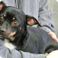 Adopt A Pet :: Beau - Albert Lea, MN