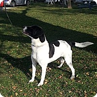 Adopt A Pet :: Elwood - Chicago, IL