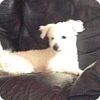 Adopt A Pet :: Johnnie - Courtesy Post - Cincinnati, OH