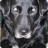 Adopt A Pet :: Capt Morgan - Madison, WI