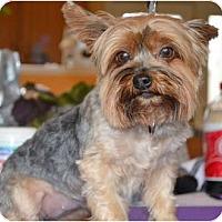 Adopt A Pet :: Dolly - Greensboro, NC