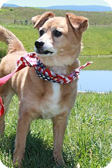 Pomeranian Mix Dog for adoption in Staunton, Virginia - Mamie