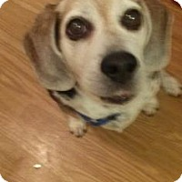 Adopt A Pet :: Mamie - Phoenix, AZ