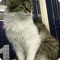 Adopt A Pet :: Coral - Mission, BC