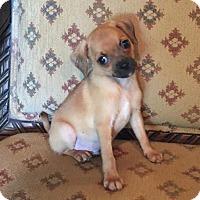 Adopt A Pet :: Reggie - Scottsdale, AZ
