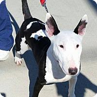 Adopt A Pet :: Betsy - Houston, TX