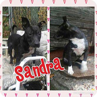 Cattle Dog/Hound (Unknown Type) Mix Puppy for adoption in Cranston, Rhode Island - Sandra
