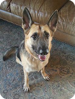 German Shepherd Dog Dog for adoption in Littleton, Colorado - MUNECA