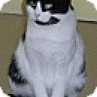 Adopt A Pet :: Trinity - Washington, VA