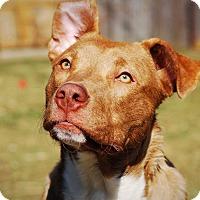Adopt A Pet :: Panther - Dayton, OH