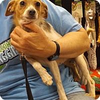 Adopt A Pet :: Penny - Memphis, TN