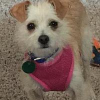Adopt A Pet :: Betty - O'Fallon, MO