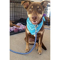 Adopt A Pet :: Luther - Broken Arrow, OK
