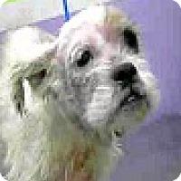 Adopt A Pet :: Mango-ADOPTION PENDING - Boulder, CO