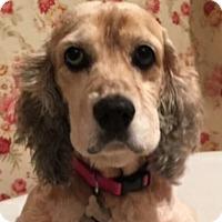 Adopt A Pet :: Emma - Sugarland, TX
