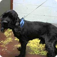 Adopt A Pet :: BILLY - Atlanta, GA