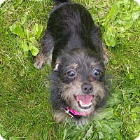 Adopt A Pet :: Betty - Salem, OR