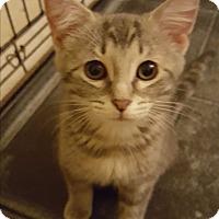 Adopt A Pet :: Chrissy - Stafford, VA