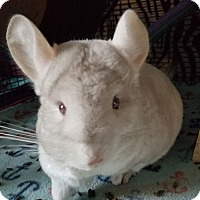 Adopt A Pet :: Ripley - Lindenhurst, NY