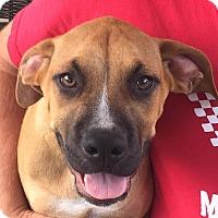 Adopt A Pet :: Carlos - Dayton, OH