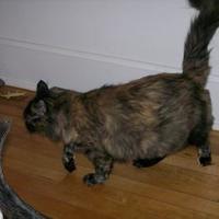 Adopt A Pet :: Snickers - Sheboygan, WI