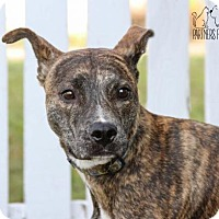 Adopt A Pet :: Bosco NKA Gogo - Troy, IL