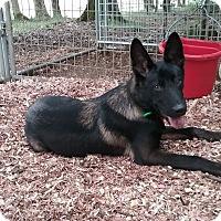 Adopt A Pet :: Quaid - Greeneville, TN