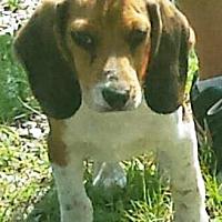 Adopt A Pet :: Walter - Oswego, IL