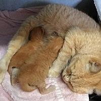 Adopt A Pet :: Eva + 2 kittens - Mount Sterling, KY