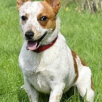 Adopt A Pet :: Janie - Salem, OR