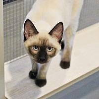 Adopt A Pet :: Siren - Lincoln, NE