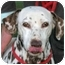 Photo 1 - Dalmatian Dog for adoption in Turlock, California - Mona