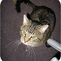 Adopt A Pet :: Slick - New York, NY