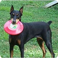 Adopt A Pet :: Gin--adopted! - New Richmond, OH