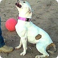 Adopt A Pet :: LAVERNE - Valley Village, CA