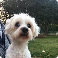 Adopt A Pet :: Jacobi - Thousand Oaks, CA