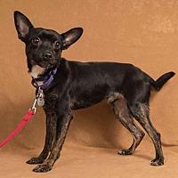 Adopt A Pet :: Jigsaw - Davis, CA
