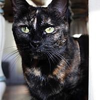 Adopt A Pet :: Lucy - Wayne, NJ