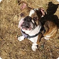 Adopt A Pet :: Poobah - Santa Ana, CA