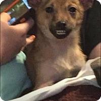 Adopt A Pet :: Cooper - Rexford, NY