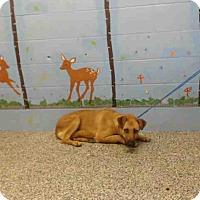 Adopt A Pet :: URGENT on 6/29 SAN BERNARDINO - San Bernardino, CA