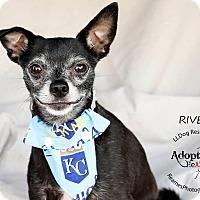 Adopt A Pet :: River - Shawnee Mission, KS