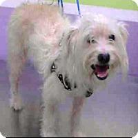 Adopt A Pet :: Gracie-ADOPTION PENDING - Boulder, CO