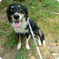Adopt A Pet :: Zippy - Randleman, NC