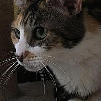 Adopt A Pet :: Gwenivere - Auburn, CA
