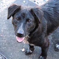 Adopt A Pet :: Winston - Cedar Bluff, AL