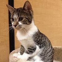 Adopt A Pet :: Shiraz - Richmond Hill, ON