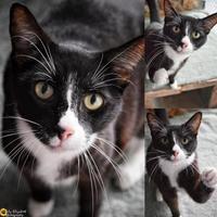 Adopt A Pet :: Cashmere - Clearwater, FL